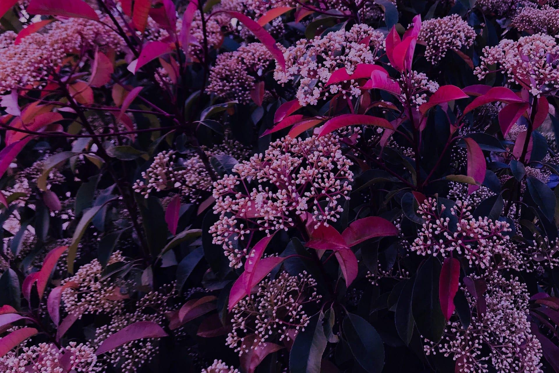 Vida y Milagros - Jardín de color. Estudio
