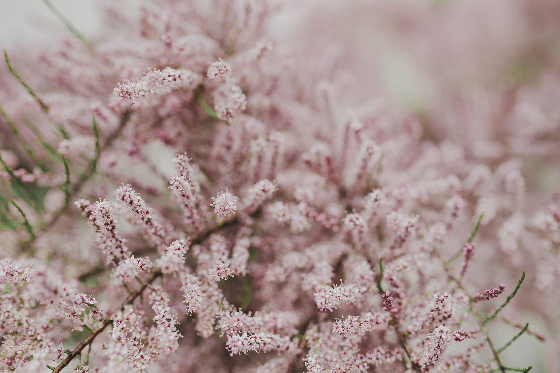 Vida y Milagros - Jardín de Color